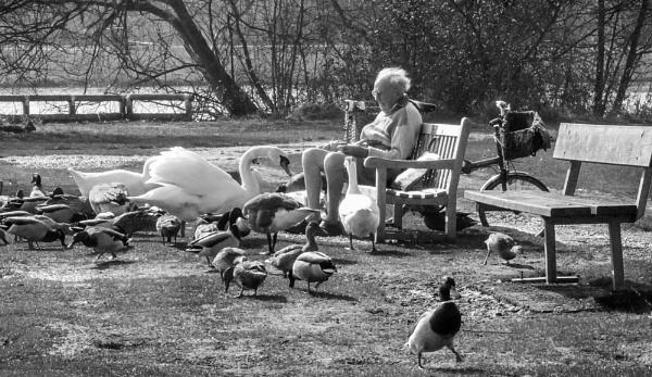 feeding the ducks by jimlad