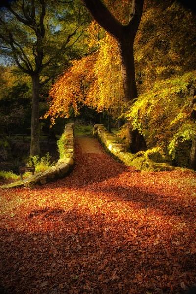 Autumn Glow by bombolini