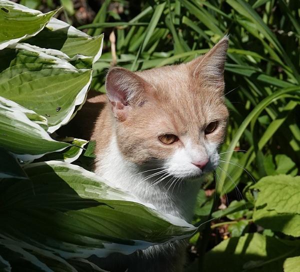 Posing behind Hosta leaves by HobbitDave