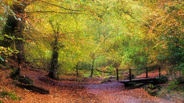 Bottom Bridge in Autumn by Shamley