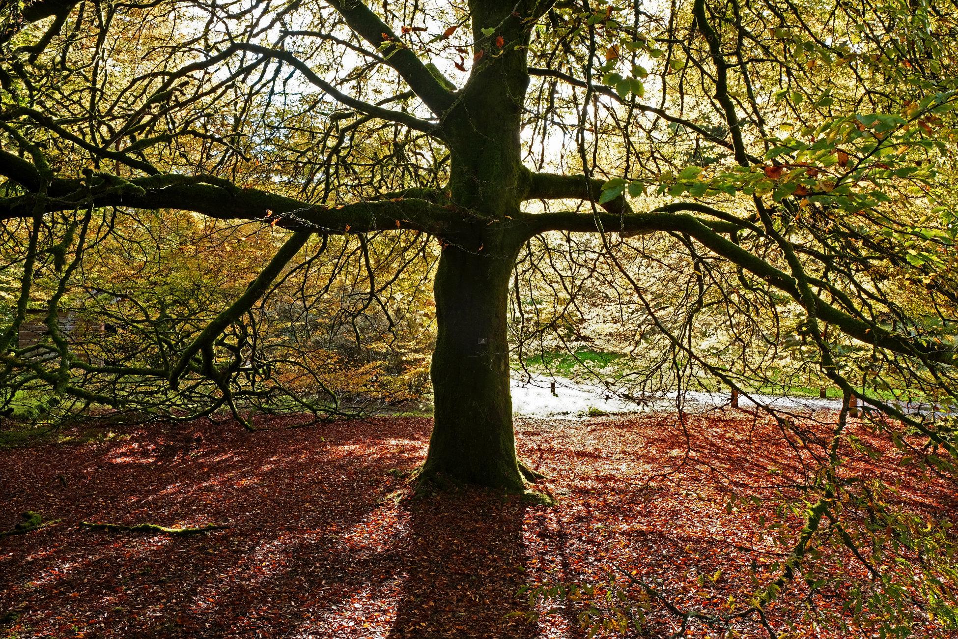 Autumn at Benmore