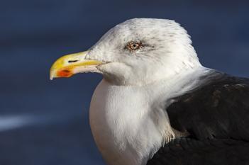 A Terrorist in the Birding World