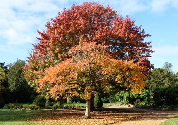Autumn colours by 64Peteschoice