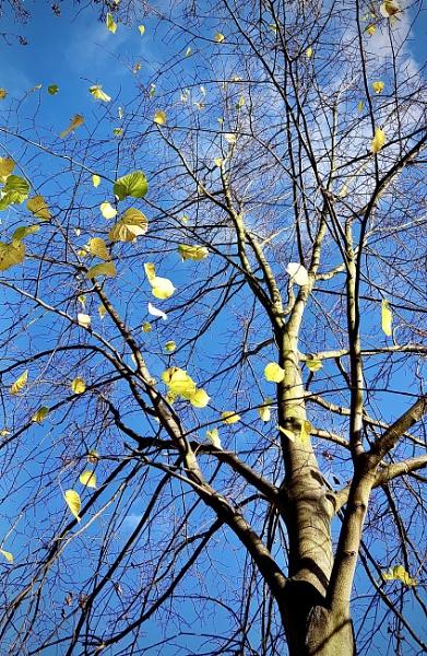 Last Leaves by nclark