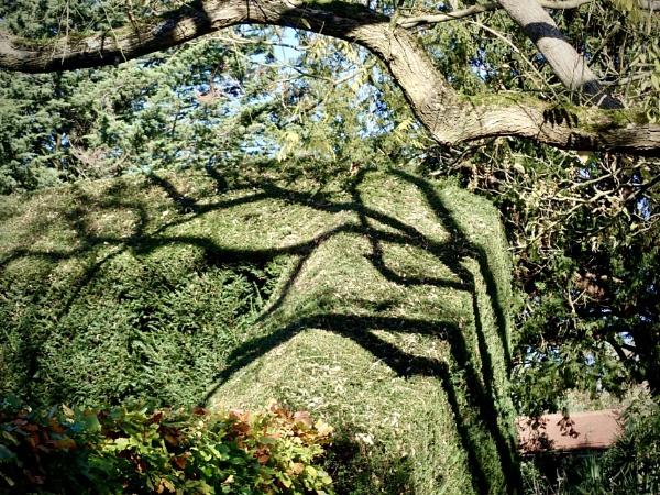 Tree Shadows by nclark