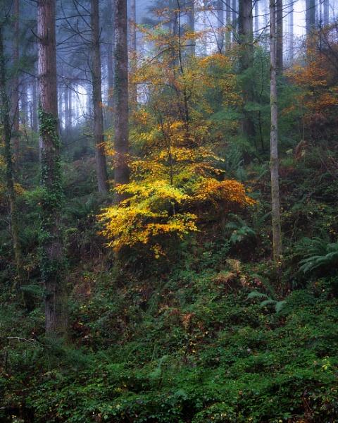 Misty Autumn Woods... by sunsetskydancer