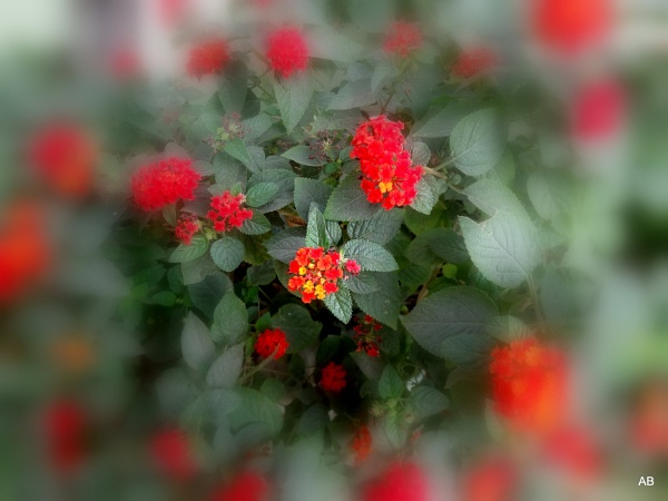 ""\"""" FLOWERS...."""" by abssastry""600|450|?|en|2|03740c5495a0a30917c32100bebc56ca|False|UNLIKELY|0.2998772859573364