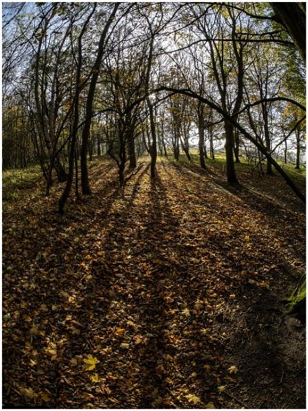 Yellow Craig Plantation by mac