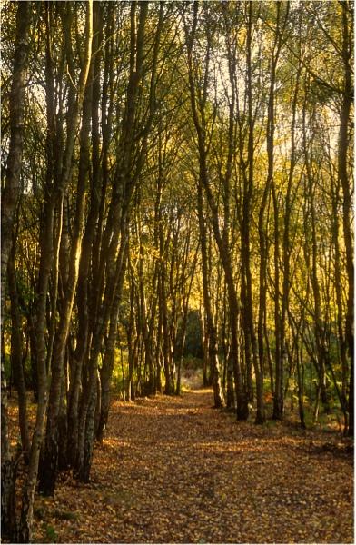 Woodland Path by dark_lord