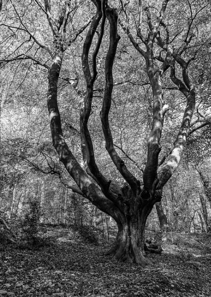 Skeleton\'s claw by pdunstan_Greymoon