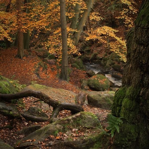 Autumn Scene by Trevhas