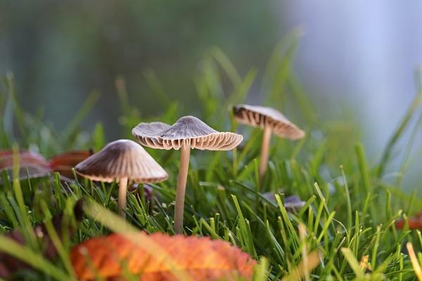 Tiny fungi by deavilin