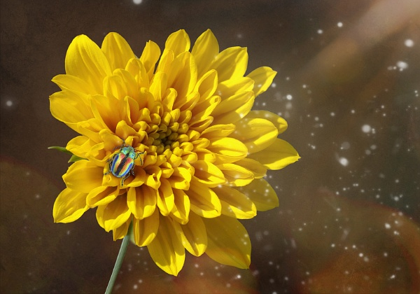 Yellow Flower by Bzox