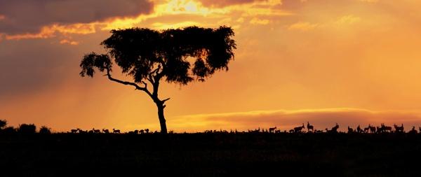 African sunset by Karuma1970