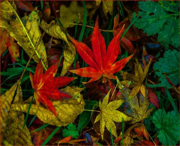more autumnal detritus... by estonian