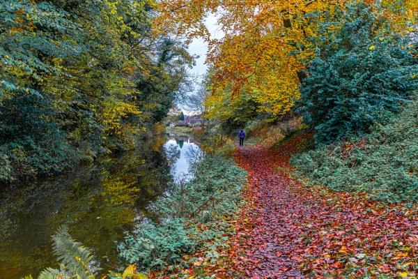 A carpet of leaves. by Morvinson
