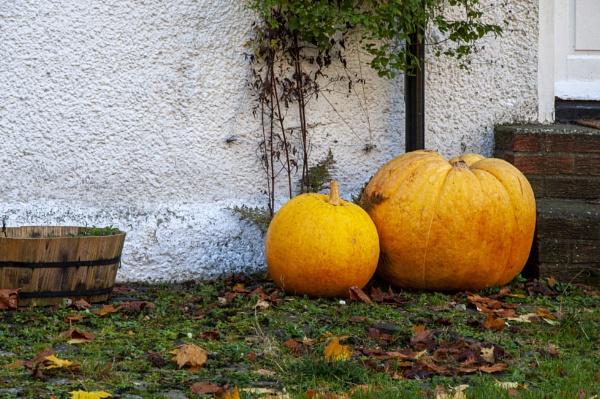 Pumpkins by scuggy