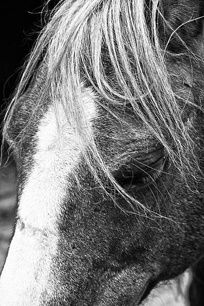 HORSES HEAD by SOUL7