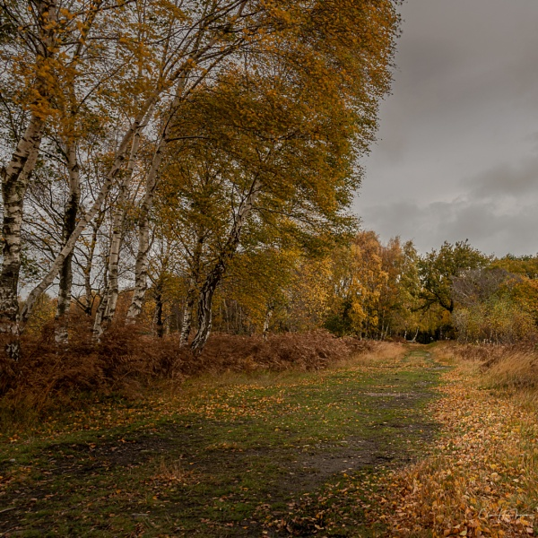 The colours of autumn by Ingymon