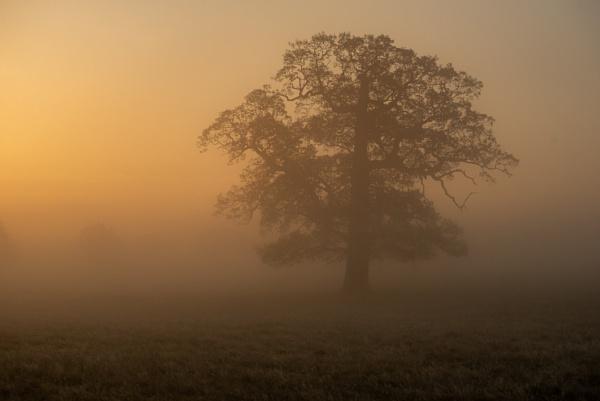 Autumnal Oak by StuartAt