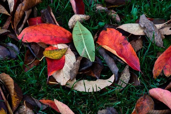 Fallen Leaves by JJGEE