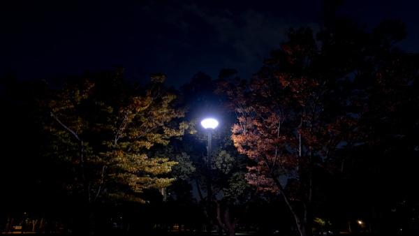 Autumn night by sato
