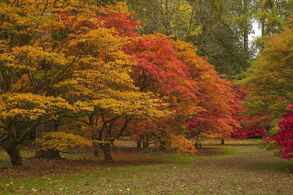 Autumn - Westonbirt Arboreteum by VincentChristopher