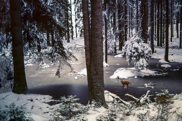 Cat on ice by Leikon