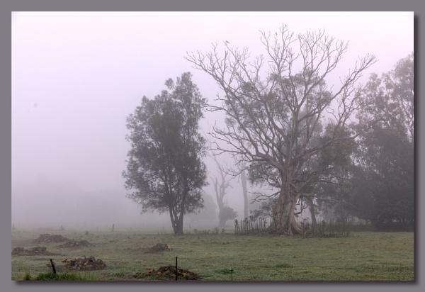 Fog by Peco