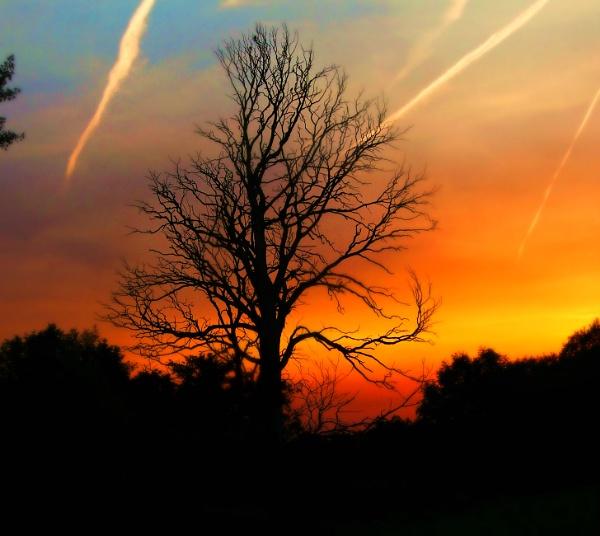 Sunset on a dead tree. by niknakpaddywhack