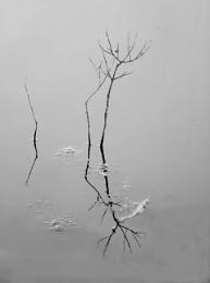 Pond Reflection Edit