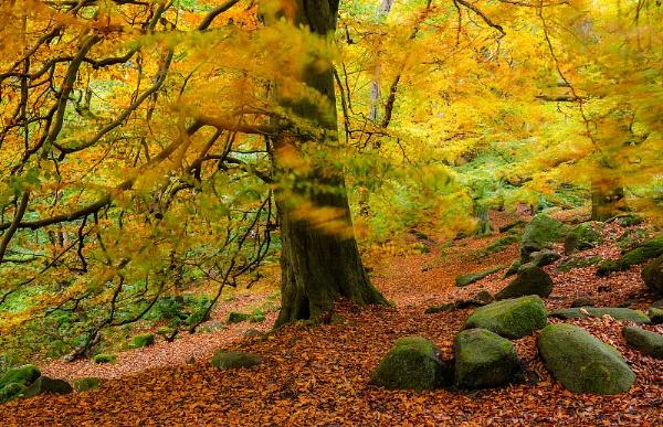 Autumn Breeze by martin.w