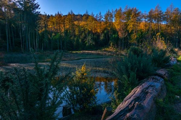 Autumn Pond by terra