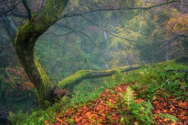 Emerging Autumn by douglasR