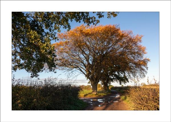 Autumn Glow by Steve-T