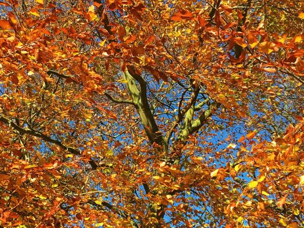 Seasonal colours by mitchellhatpeg