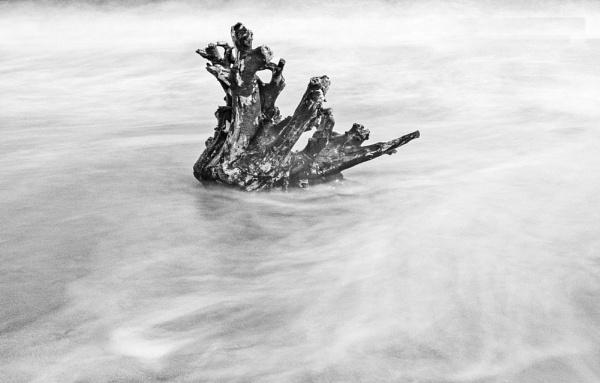 Driftwood by KazG