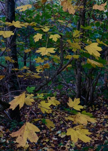 A few leaves in Autumn by Meditator