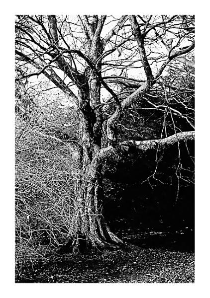 Bare Tree by Lontano