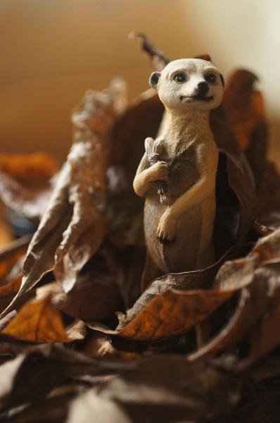 Meerkat Mischief by bobby55