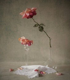 Still Life with Rose and Petals