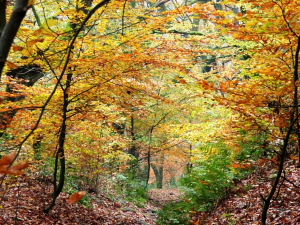 Autumn in Jumble hole clough by cookyphil