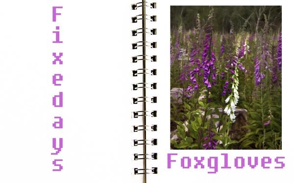Fonts & Flowers by Irishkate