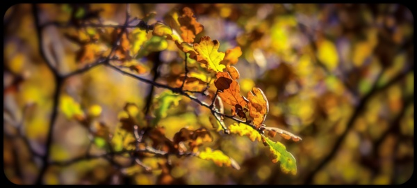 Autumn Leaves by Yogendra