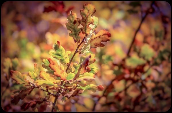 Autumn Leaves II by Yogendra