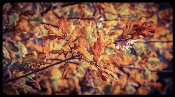 Autumn Leaves III by Yogendra