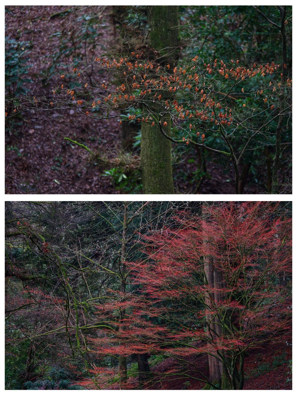 Autumn diptych