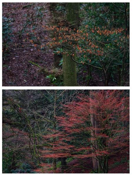 Autumn diptych by notsuigeneris