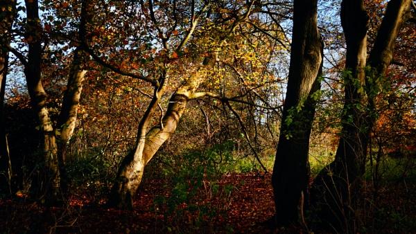 Autumnal Change by pauljt