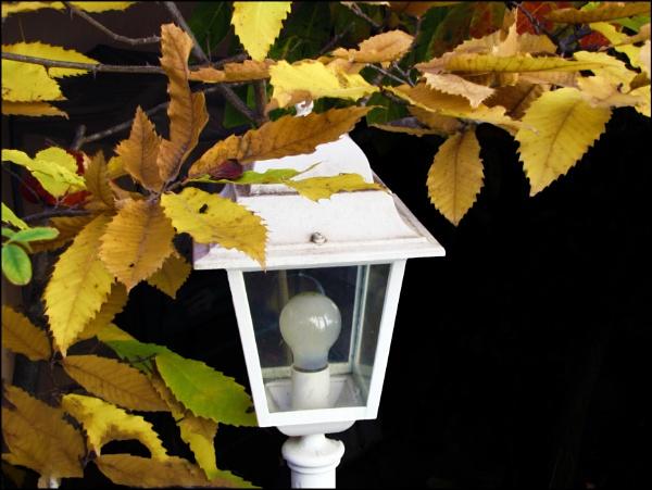 Autumn light by laura1